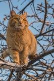 Красивый яркий красный кот с желтыми глазами и розовым носом на дереве с белым снегом и заморозке в зиме стоковая фотография