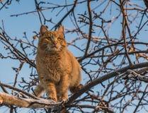 Красивый яркий красный кот с желтыми глазами и розовым носом на дереве с белым снегом и заморозке в зиме стоковые изображения