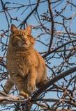 Красивый яркий красный кот с желтыми глазами и розовым носом на дереве с белым снегом и заморозке в зиме стоковое изображение rf