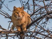 Красивый яркий красный кот с желтыми глазами и розовым носом на дереве с белым снегом и заморозке в зиме стоковые фотографии rf