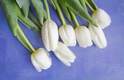 Красивый blossoming цветок тюльпана иллюстрация конструкции карточки предпосылки фона флористическая против предпосылки голубые о Стоковые Изображения