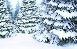 Красивый coniferous лес в снеге Открытка на Новый Год красивейший вектор валов иллюстрации рождества стоковая фотография