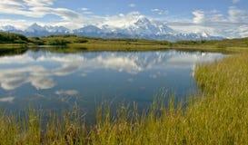Красивый Denail в Аляске Стоковые Изображения