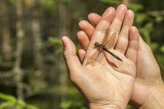 Красивый dragonfly при поврежденное крылу сидит на человеке его Стоковые Фото