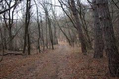 Красивый fairy лес осени в горах Стоковые Фото