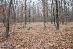 Красивый fairy лес осени в горах Стоковое фото RF