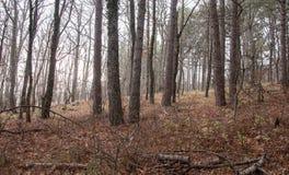Красивый fairy лес осени в горах Стоковое Изображение