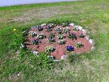 Красивый flowerbed в июне стоковое изображение