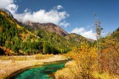 Красивый Green River с кристаллом - чистая вода среди падения fields Стоковая Фотография RF