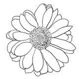 Красивый monochrome эскиз, черно-белый изолированный цветок георгина Стоковые Фото