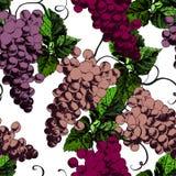 Красивый pattren с виноградинами Бесплатная Иллюстрация