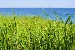 Красивый seascape весны с зеленой травой стоковое изображение