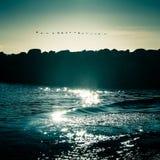 Красивый seascape с перелётные птицы Стоковые Изображения RF