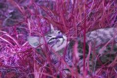 Красивый striped играя и охотясь котенок неизвестной породы в траве на открытом воздухе Стоковые Фото