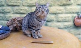 Красивый striped котенок на таблице Стоковые Изображения RF