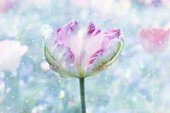 Красивый tricolored попуга-тюльпан, весна будя дизайн с стоковая фотография