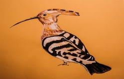Красивый woodpecker на покрашенном картоне Стоковое Фото