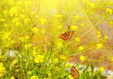 2 красивых бабочки на желтых цветках Стоковые Изображения RF