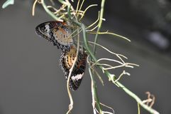 2 красивых бабочки сидят на корнях орхидеи стоковое фото rf
