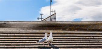 2 красивых белых птицы, чайки на крыше vill взморья Стоковая Фотография