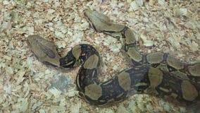 2 красивых змейки Стоковое Изображение RF