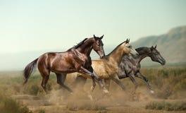 3 красивых лошади в прериях стоковое изображение