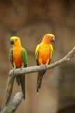 2 красивых попугая Стоковое Фото