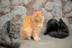 3 красивых пушистых бездомных кота Стоковое фото RF