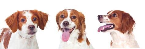 3 красивых собаки стоковое фото