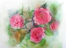 Красить роз акварели Стоковое Изображение RF