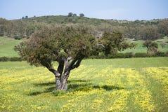 красит весну Сардинии Стоковое фото RF