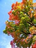 красит листво Вермонт Стоковые Изображения