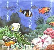 красит море тропическими Стоковые Изображения