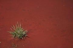 красит природу Стоковая Фотография RF