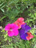красит природу Стоковые Изображения