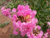 красит природу Стоковые Фото
