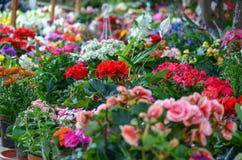 красит сад цветков соединено Стоковые Изображения