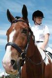 краска 002 лошадей Стоковые Изображения