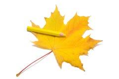 краска 3 листьев Стоковые Изображения RF