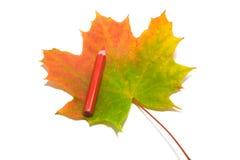 краска 4 листьев Стоковое фото RF