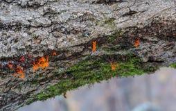 Краски леса Стоковые Изображения RF