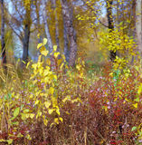 краски осени Стоковое фото RF