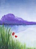 Красная акварель маков. Стоковое Изображение