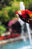 Красная ара стоковые изображения rf
