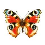 Красная бабочка, на белизне Стоковые Изображения RF