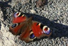 Красная бабочка на цементе Стоковое Фото