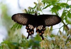 красная бабочка Стоковое Изображение RF
