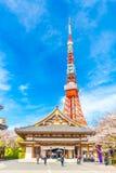 Красная башня антенны токио с задней частью голубого неба цветка цветения Сакуры Стоковое Изображение