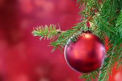 Красная безделушка рождества на зеленой ветви ели Стоковое Фото