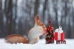 Красная белка украшает рождественскую елку Стоковая Фотография